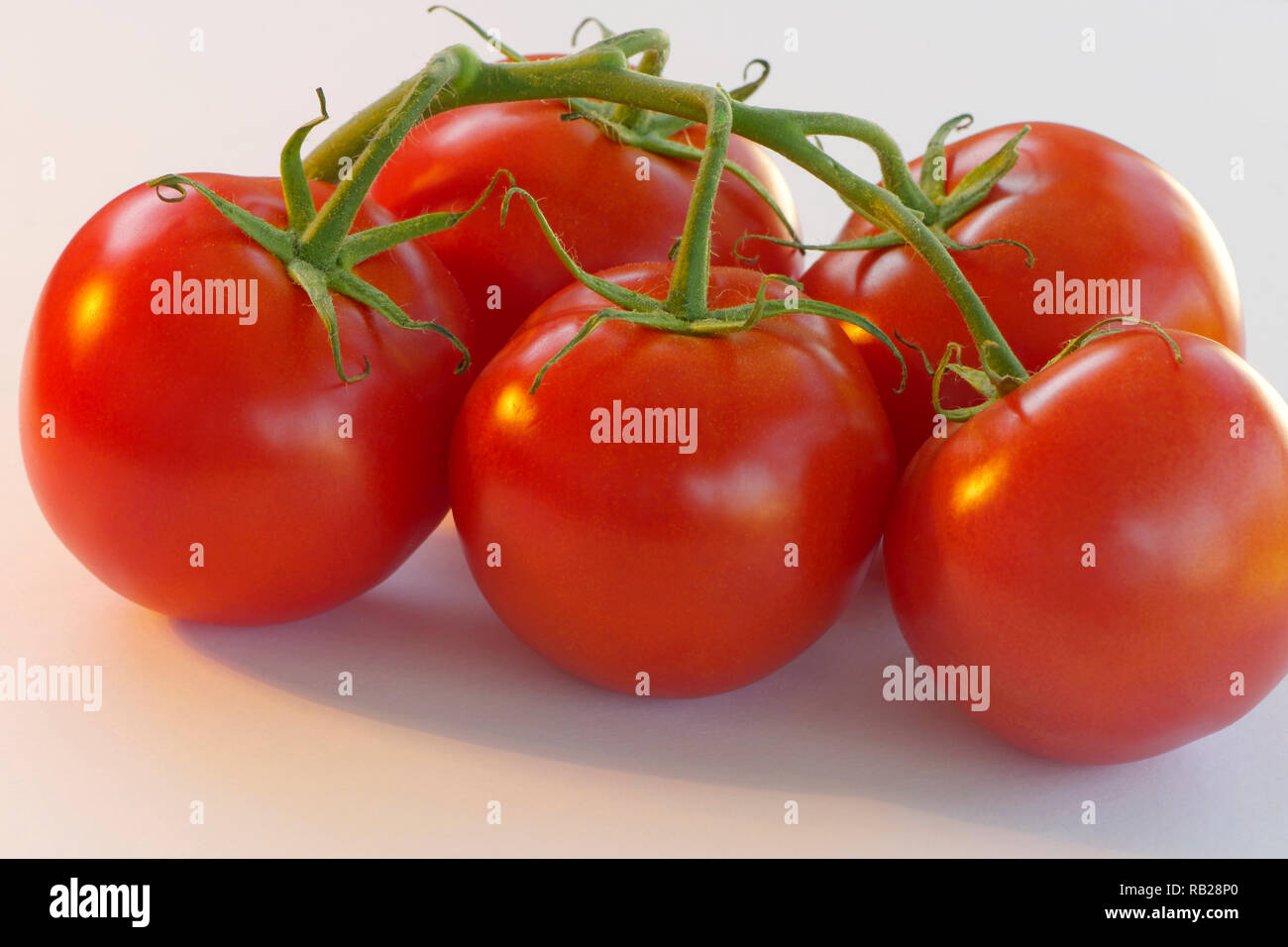 Five round, red tomatoes on the vine (Solanum lycopersicum) on a white background. - Stock Image
