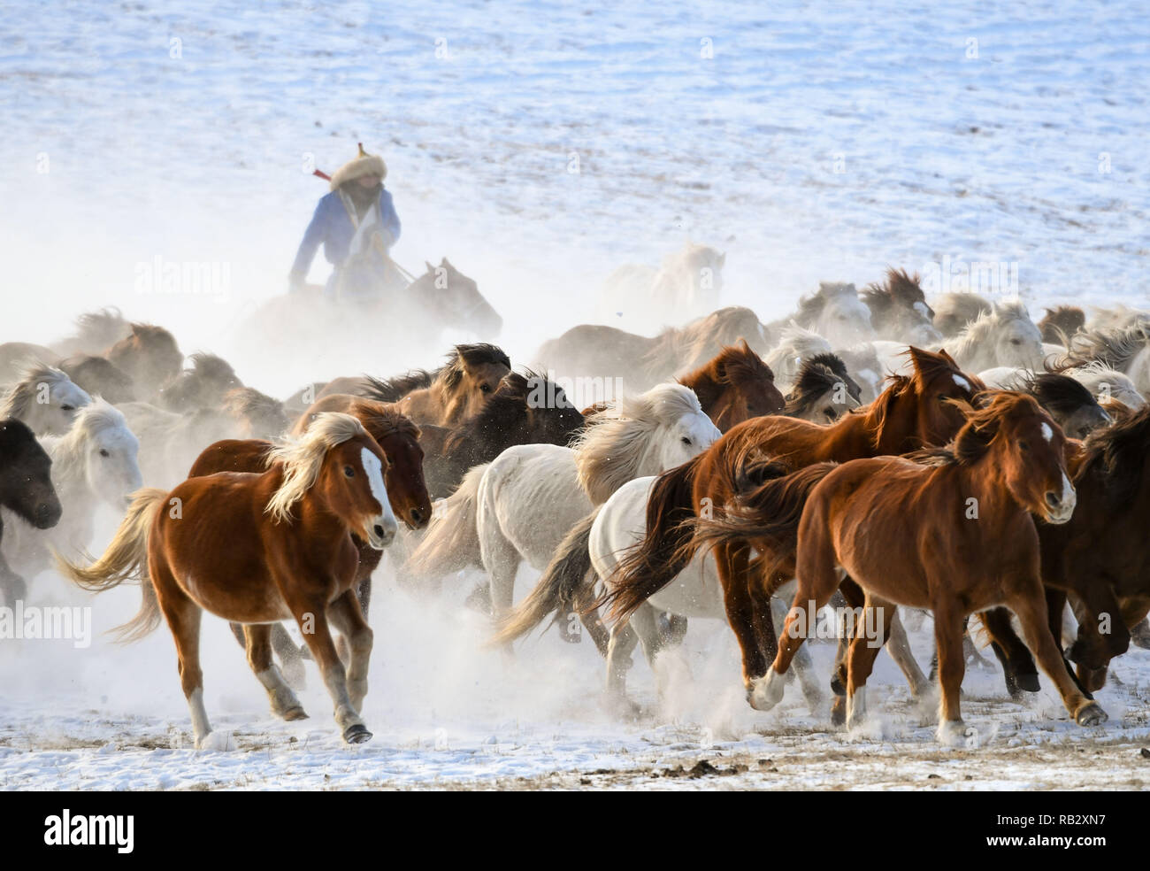 Chifeng, China's Inner Mongolia Autonomous Region. 6th Jan, 2019. A herdsman drives horses on the snow-covered grassland in Hexigten Banner of Chifeng City, north China's Inner Mongolia Autonomous Region, Jan. 6, 2019. Inner Mongolia greets a peak tourism season in winter recently. Credit: Peng Yuan/Xinhua/Alamy Live News - Stock Image