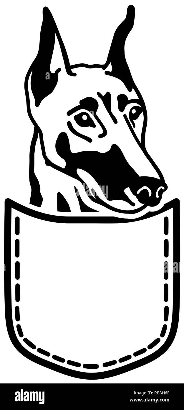 Doberman dog in a pocket - Stock Vector
