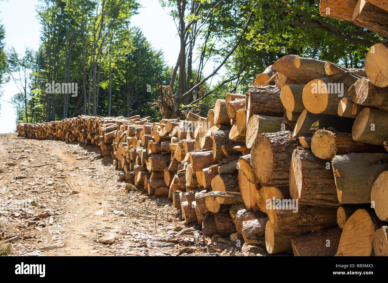 Forestry Industry. Log stacks along the forest road. - Stock Image