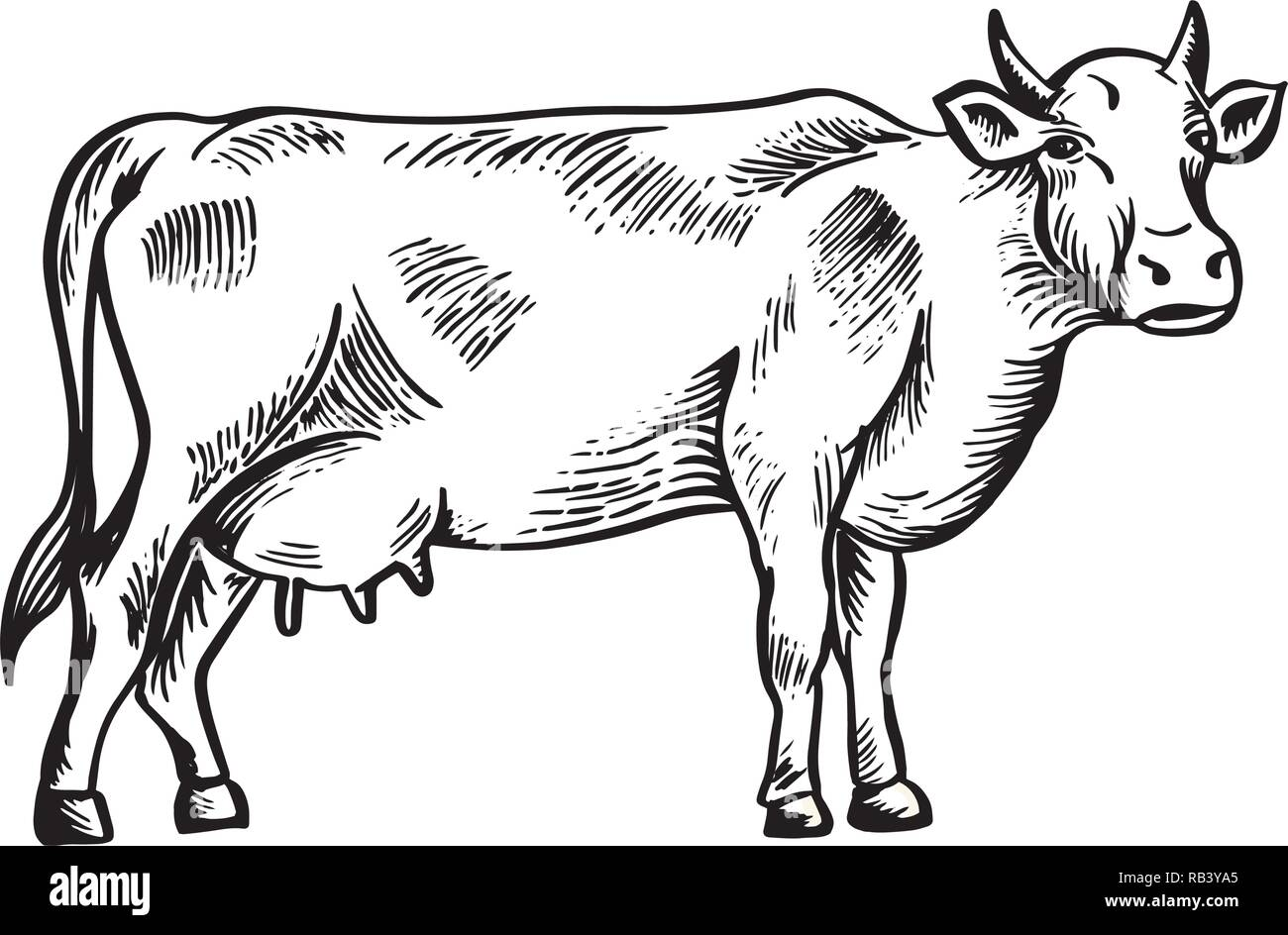 Cow Face Stock Vector Images - Page 2 - Alamy