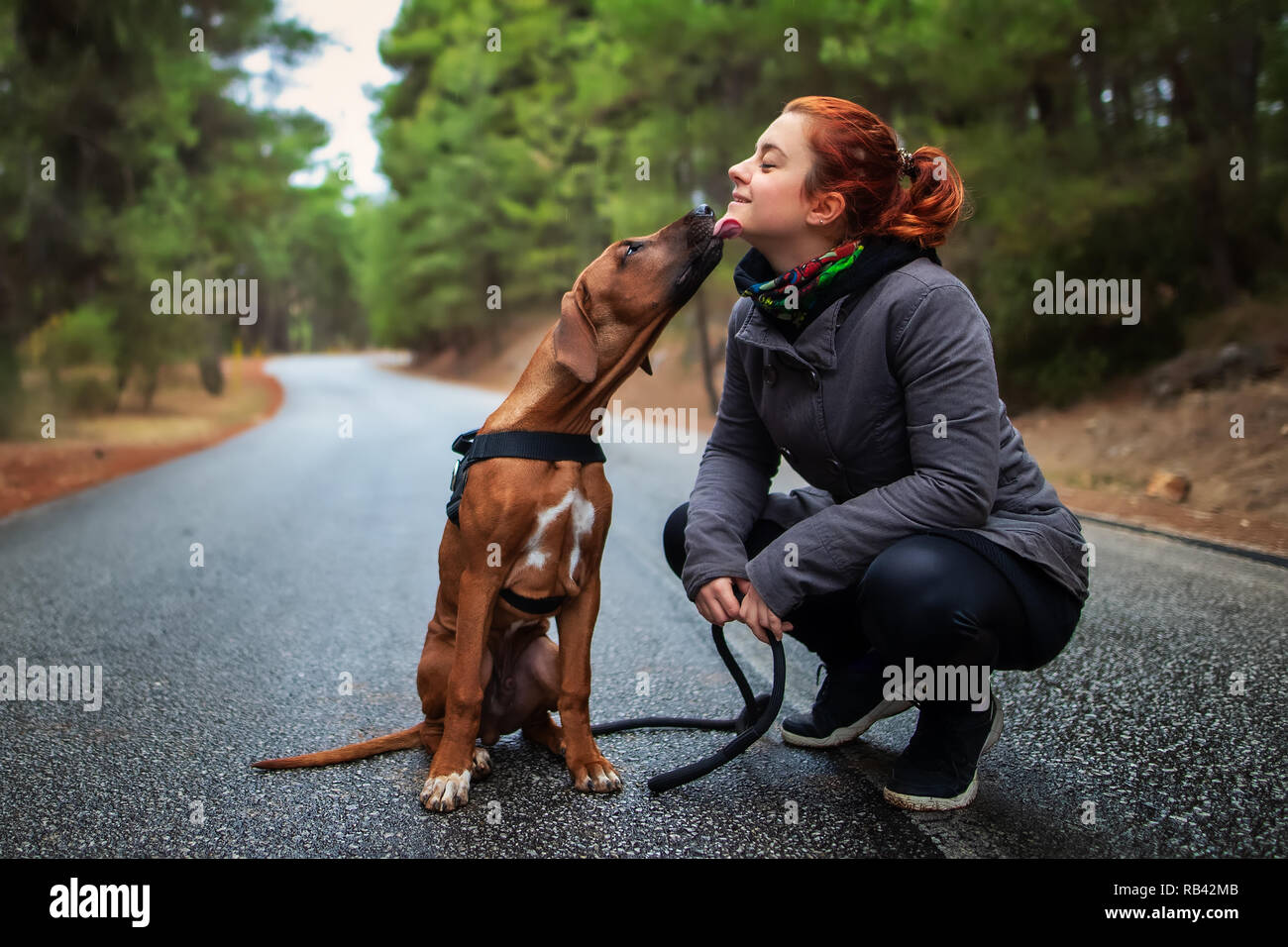Portrait of happy teenage girl and Rhodesian ridgeback dog . Dog giving girl sweet kiss lick. Love animals love my pet - Stock Image