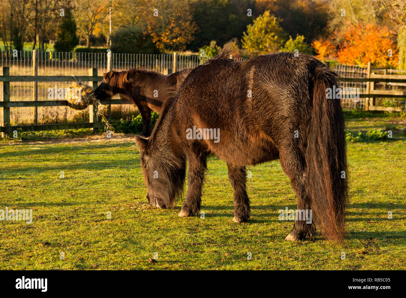 Farming Diversification. Horses at livery - Stock Image