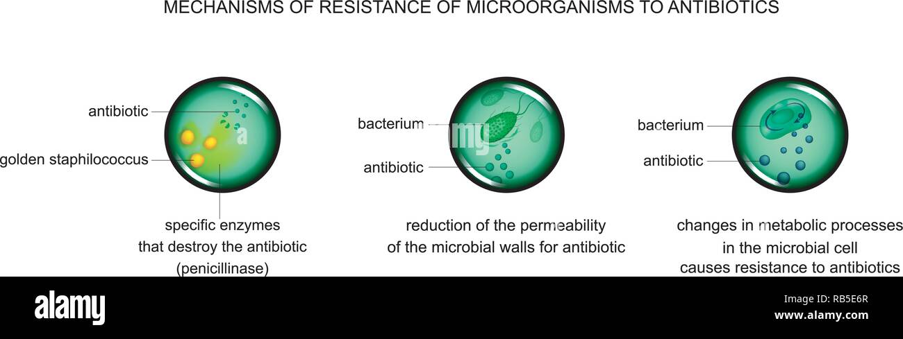 vector illustration of mechanisms of microbial cell resistance to antibiotics - Stock Image