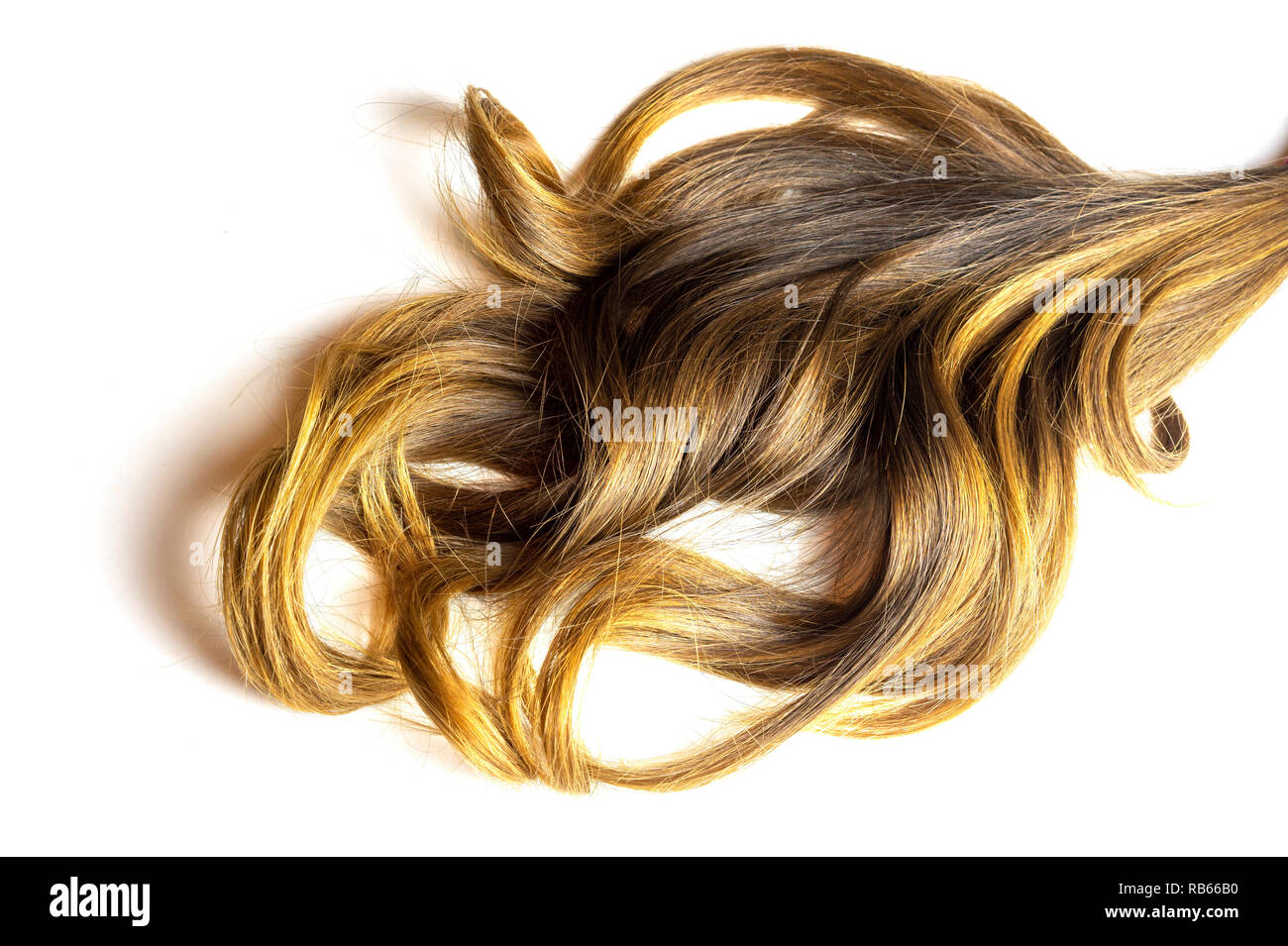 piece of brown curly shiny hair on white isolated background - Stock Image