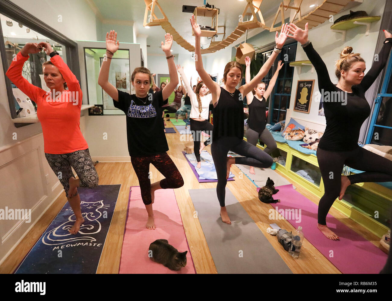 Houston Usa 6th Jan 2019 Yoga Participants Attend A Yoga Class As Cats Hang Around The El Gato Coffeehouse A Cat Cafe In Houston Texas The United States On Jan 6 2019