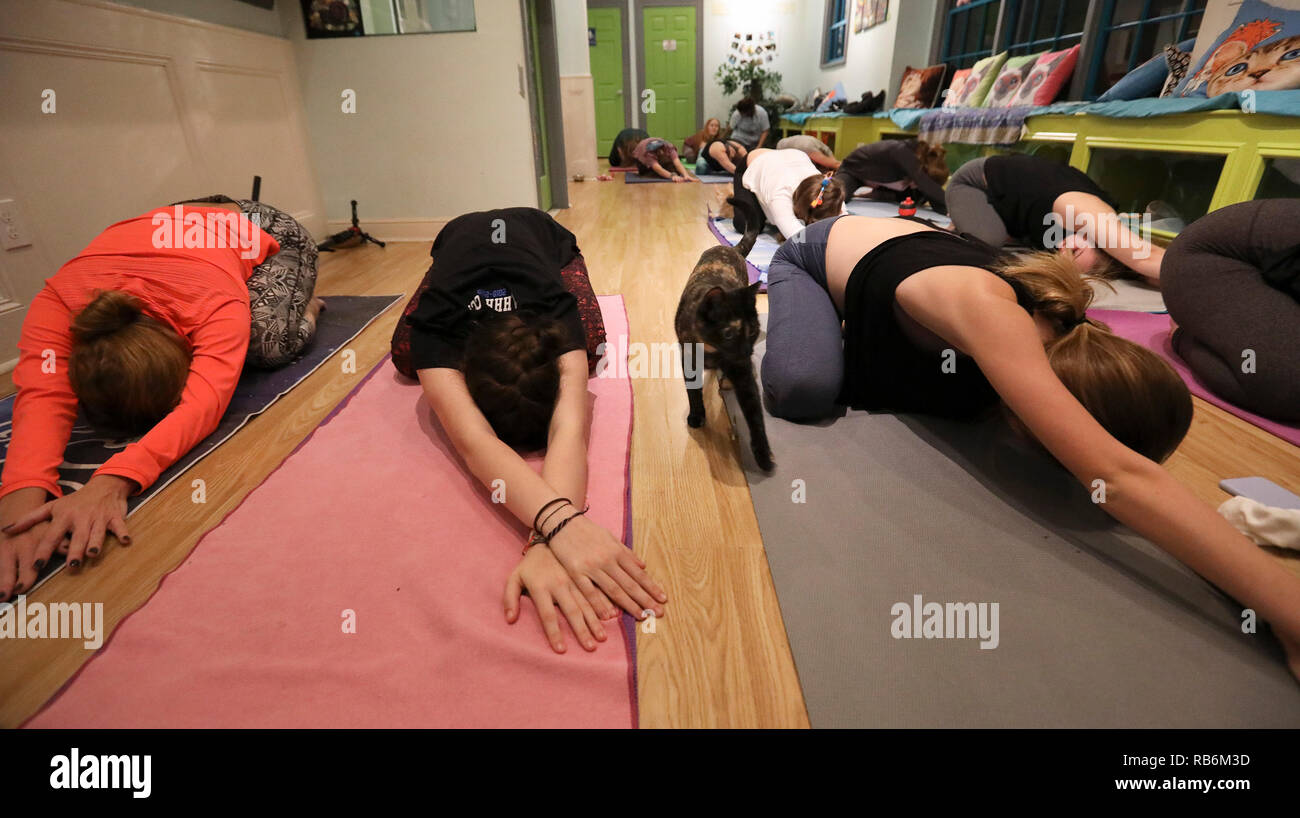 Houston Usa 6th Jan 2019 A Cat Walks As Yoga Participants Have A Yoga Class At