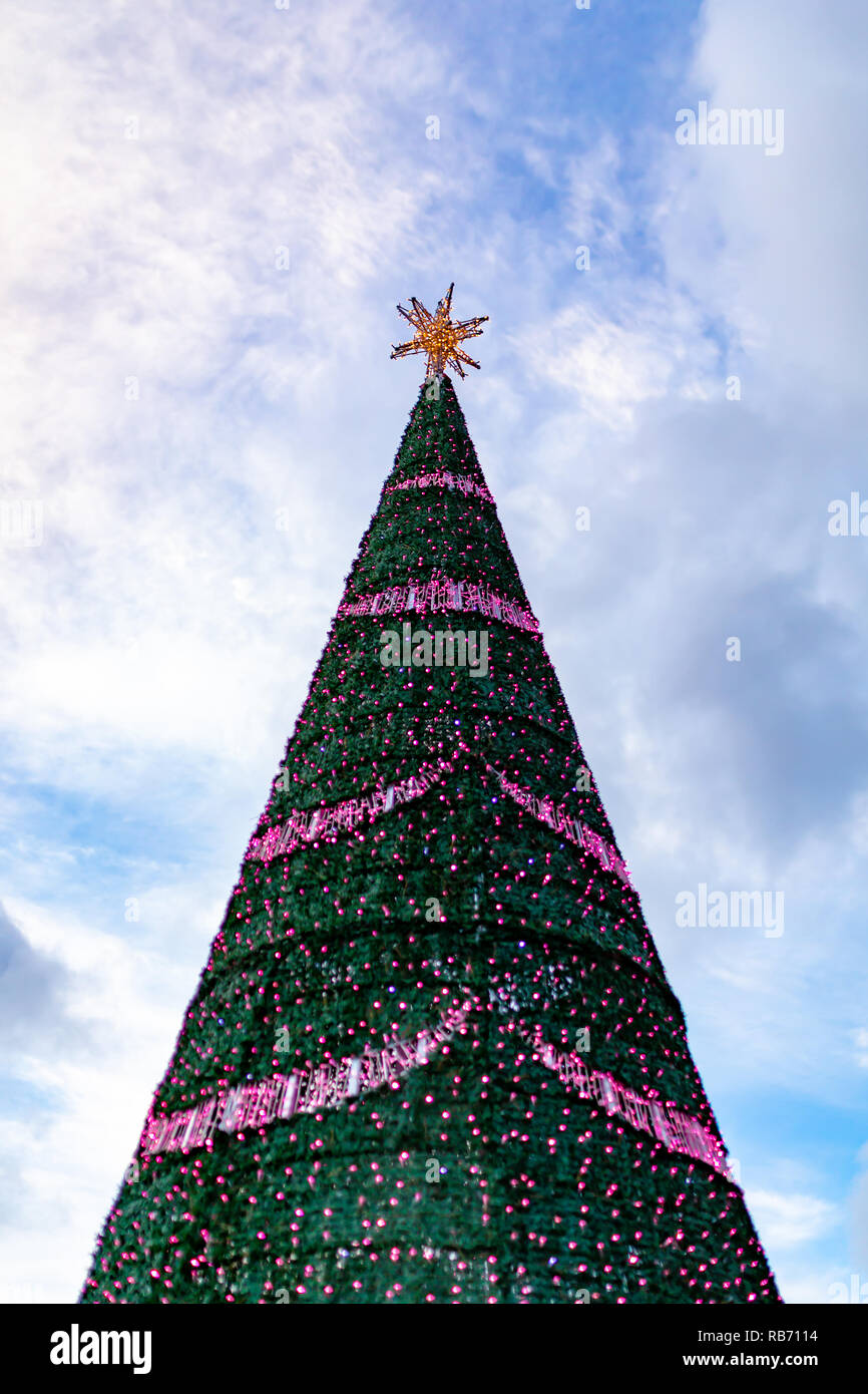 Colour photograph of large conical Christmas tree decorated with a gold star and pink lights taken from below. - Stock Image