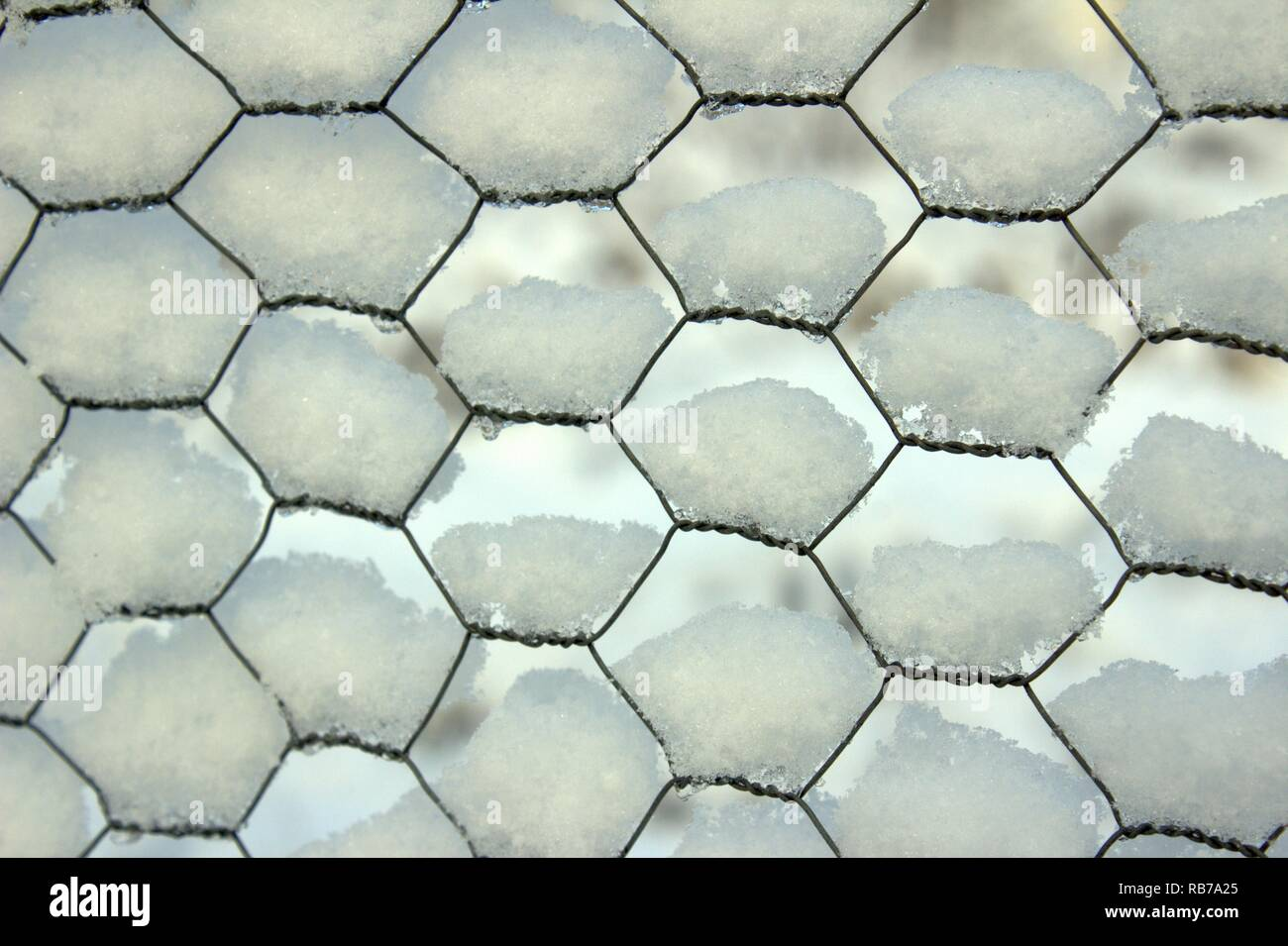 Snow On A Chicken Wire Fence In Winter - Stock Image