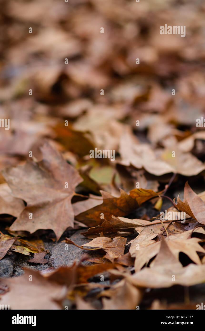 Carpet of autumn leaves in Paris, France. - Stock Image