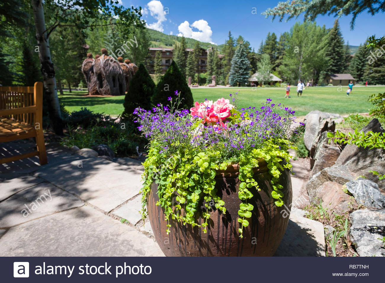Colorful Plants And Flowers In The Betty Ford Alpine Gardens Vail