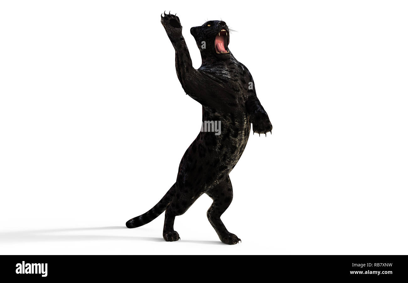 3d Illustration Black Panther Isolate on White Background with Clipping Path, Black Tiger - Stock Image