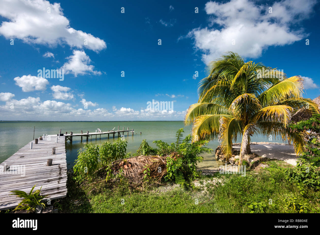 Boardwalk, palm tree at Corozal Bay seashore, Caribbean Sea coast, Cerros Beach Resort, Cerros Peninsula, Corozal District, BelizeBoardwalk, palm tree - Stock Image