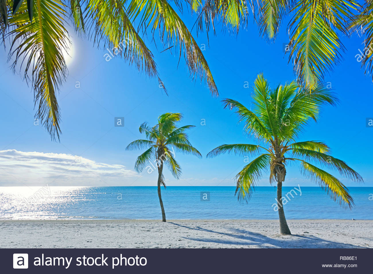 Tropical beach, Key West, Florida, USA - Stock Image