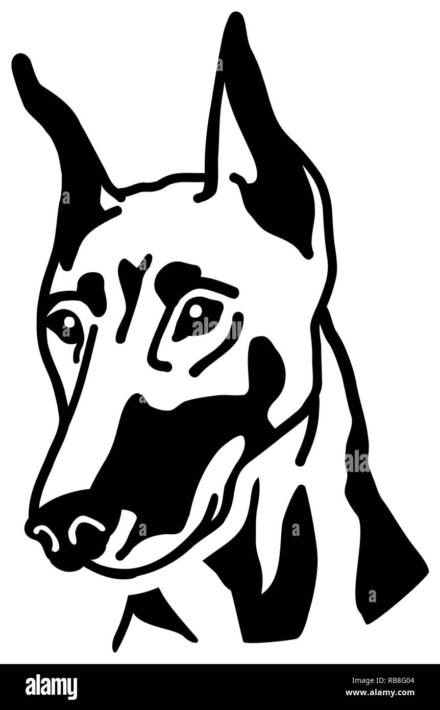 Doberman head black and white - Stock Image