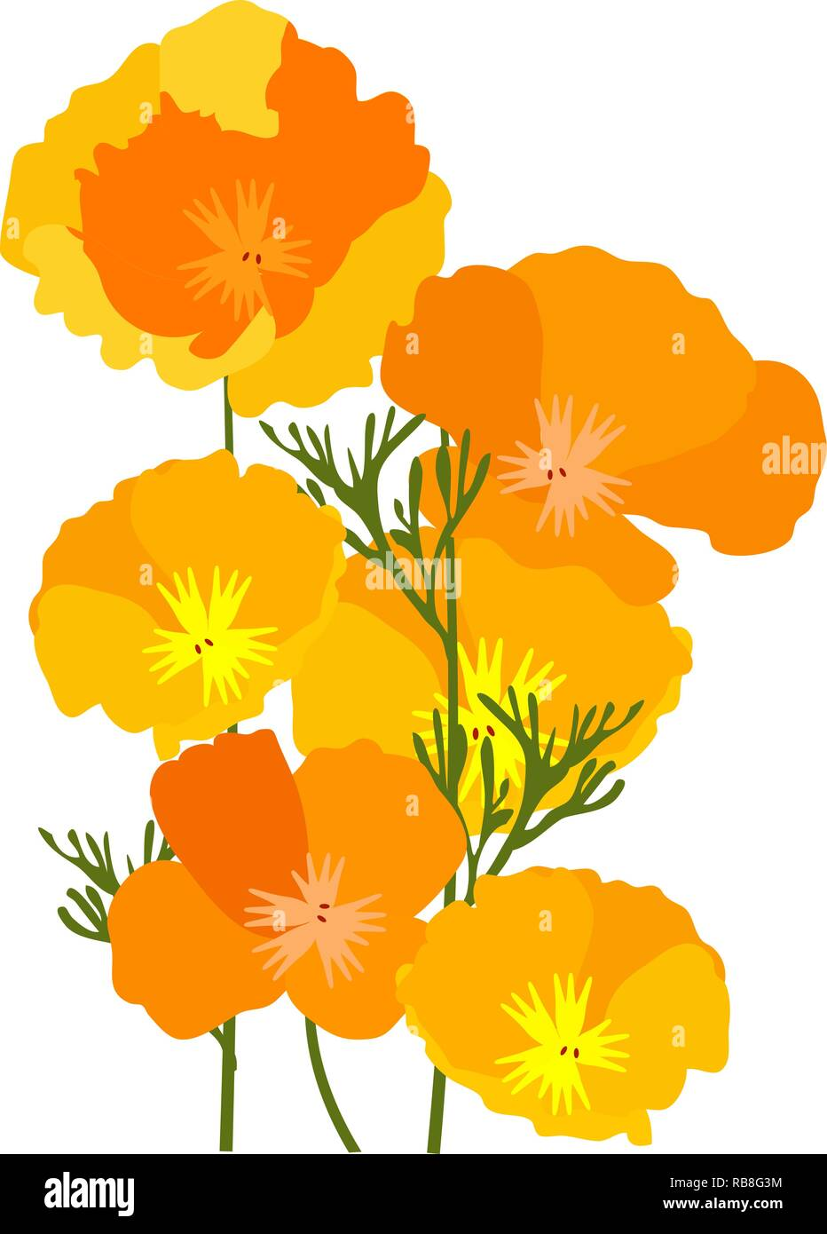 vector illustration of California state yellow and orange poppies. Stock Vector