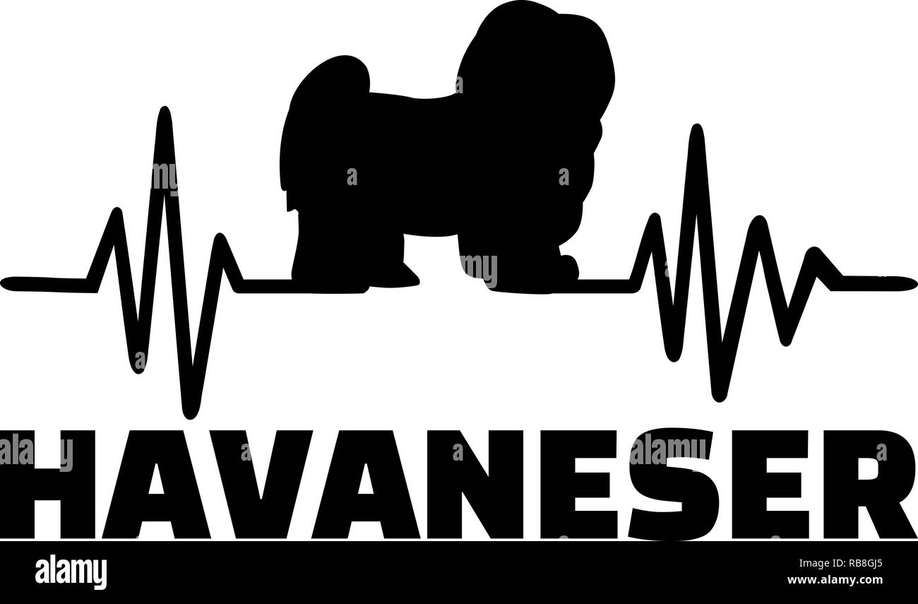 Heartbeat pulse line with Havanese dog silhouette german Stock Photo