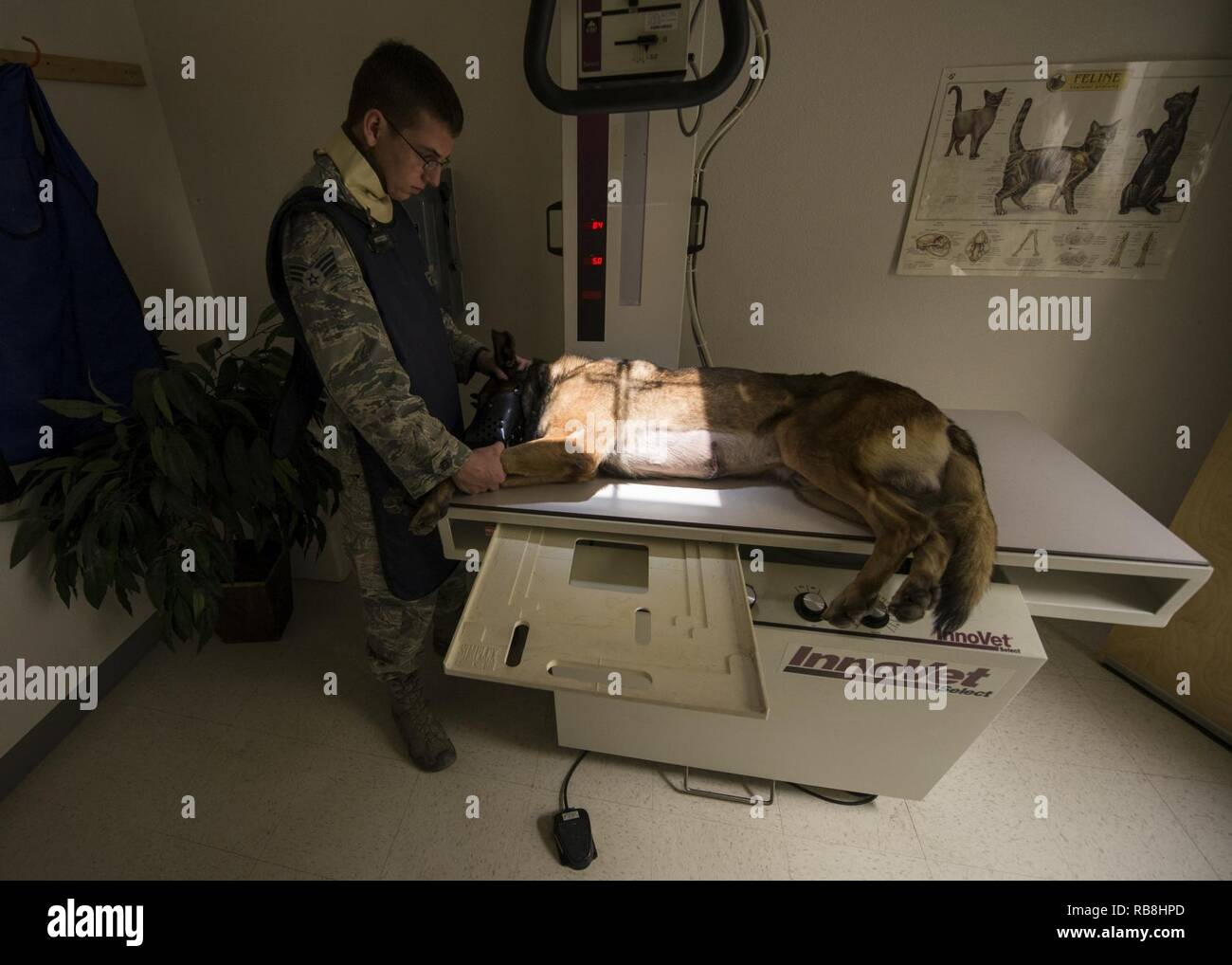 Staff Sgt. David, a military working dog handler with the 49th Security Forces Squadron, assists his military working dog, Dylan, during an x-ray scan at the veterinary clinic at Holloman Air Force Base, N.M., on Dec. 13, 2016. Four of Holloman's MWDs are battling health and medical related issues. To prevent and combat illness, the dogs routinely attend dental and medical checkups at the veterinary clinic on base. (Last names are being withheld due to operational requirements. U.S. Air Force - Stock Image
