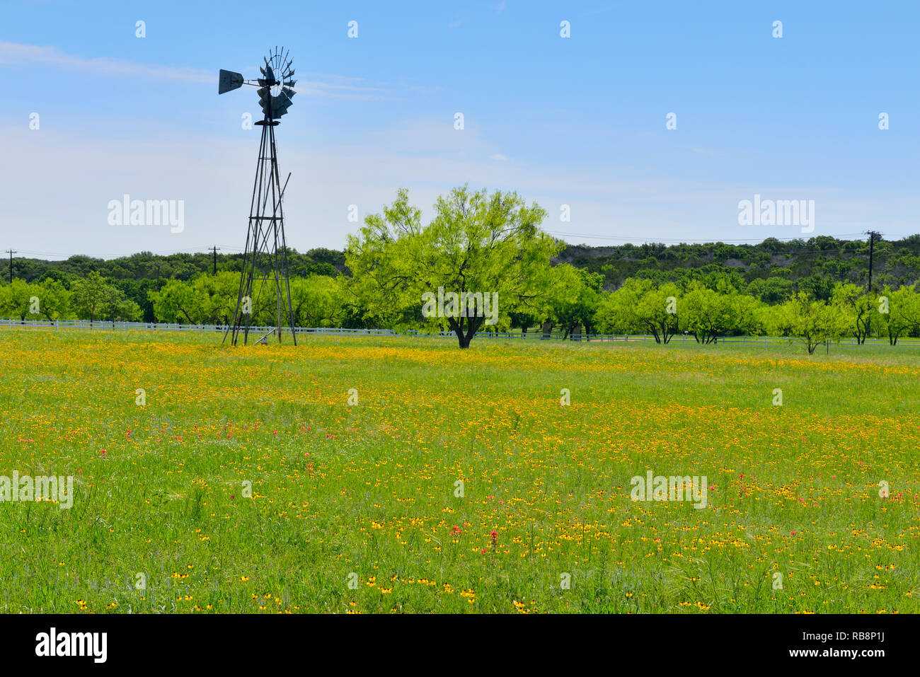 Flowers in a pasture with a wind-powered pump, Burnet County, Texas, USA Stock Photo