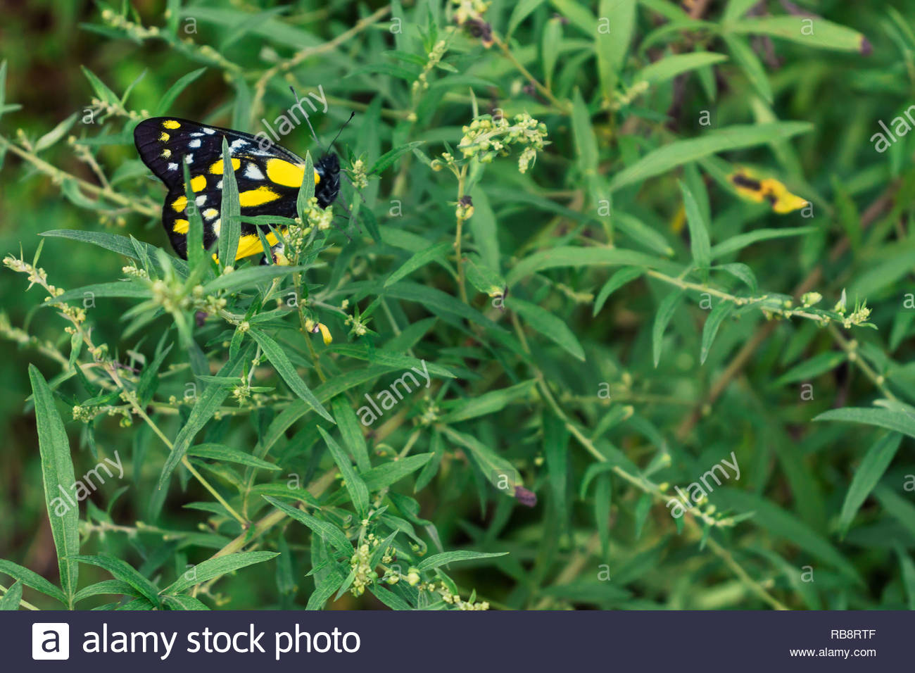 close up of butterfly on top of vibrant green plants - Stock Image