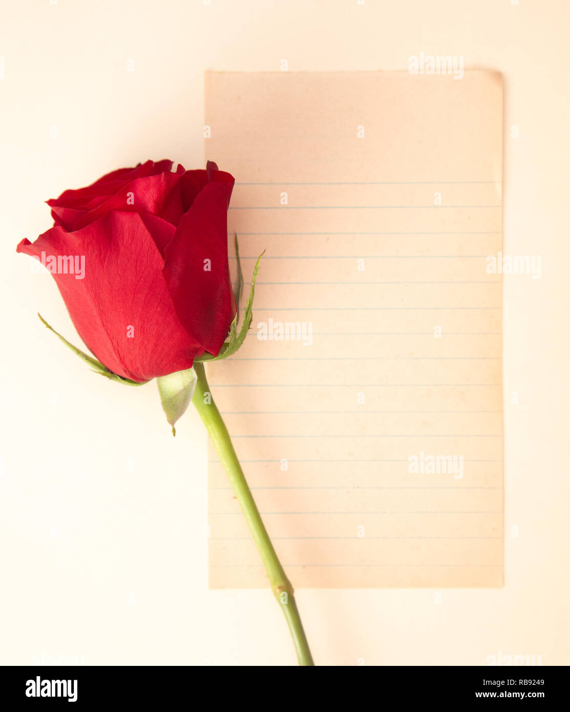 A Single Rose with a Blank Page for Writing a Love Note - Stock Image
