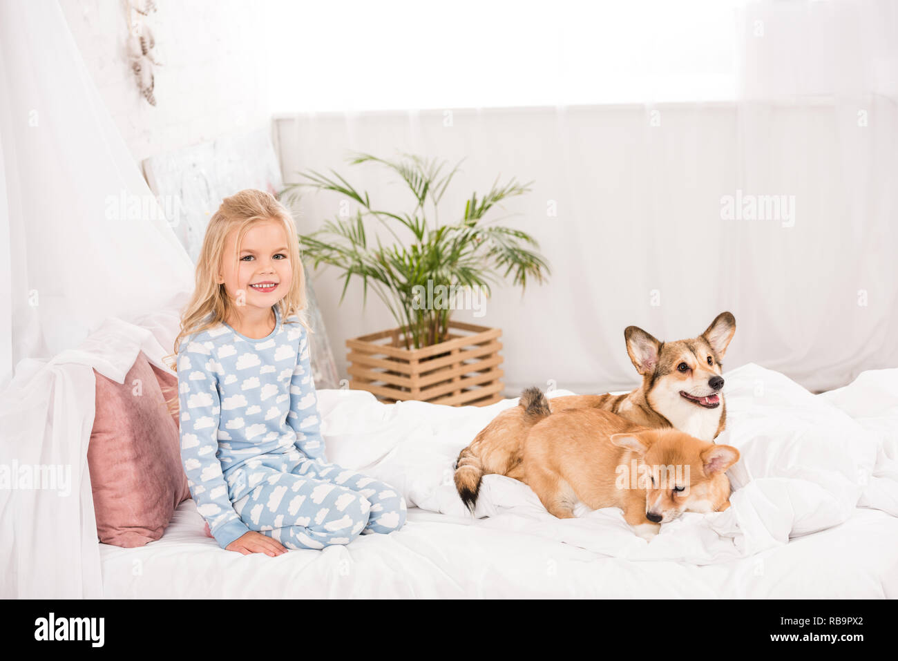 adorable happy child in pajamas sitting with corgi dogs in bed - Stock Image