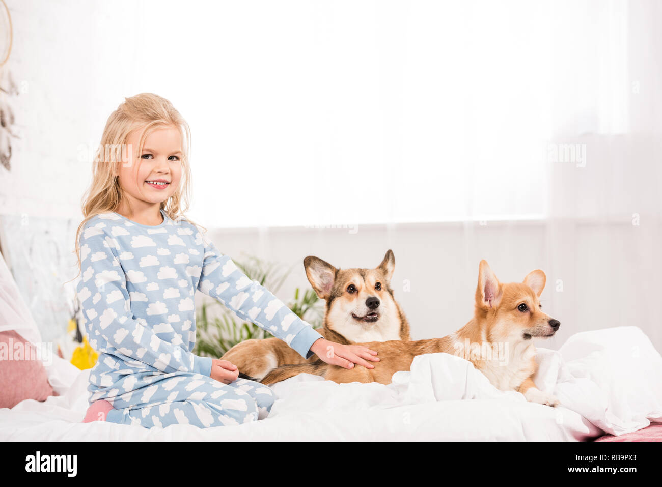 adorable kid in pajamas petting corgi dogs in bed - Stock Image