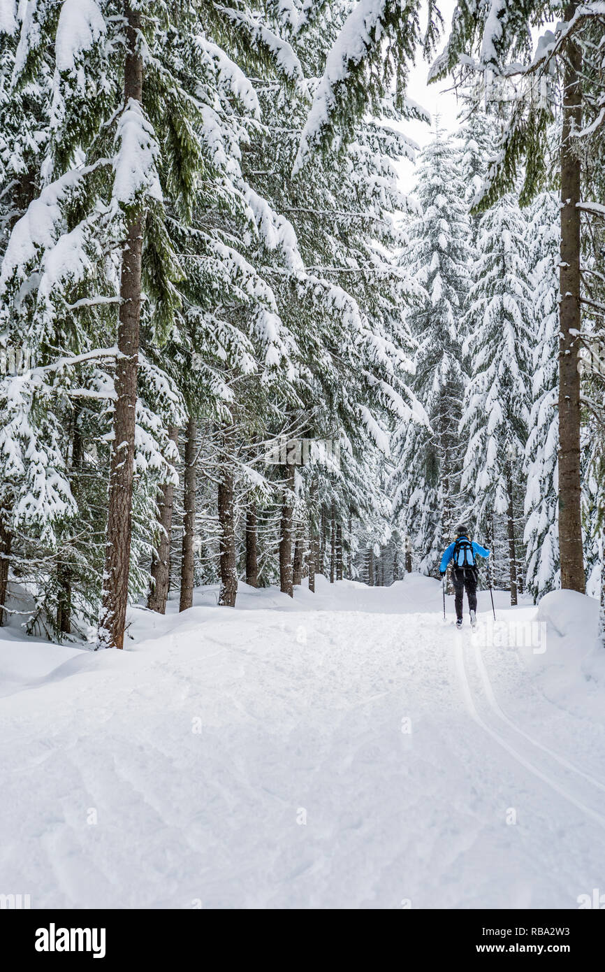 A woman cross country skiing along a groomed trail through snow covered trees. Cabin Creek Snowpark, Washington Cascades, USA. - Stock Image