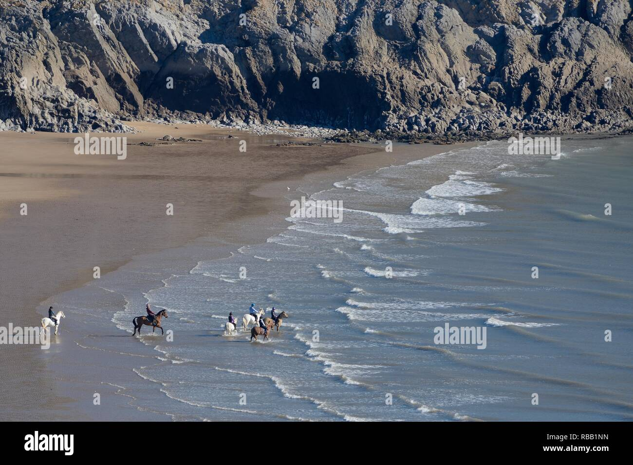 Overview of a group of Horses (Equus caballus) being ridden into shallow sea water lapping a beach at low tide, Three Cliffs Bay, The Gower, Wales, UK - Stock Image