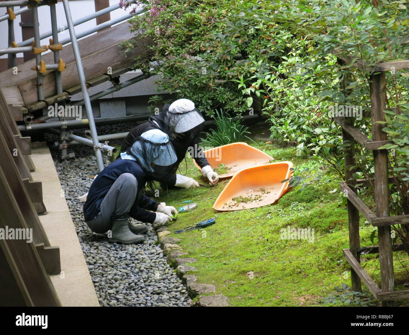 Two Japanese gardeners wearing gardening clothes and headgear, are meticulous in tidying the moss and stones in a garden at Ryoan-ji Temple, Kyoto - Stock Image