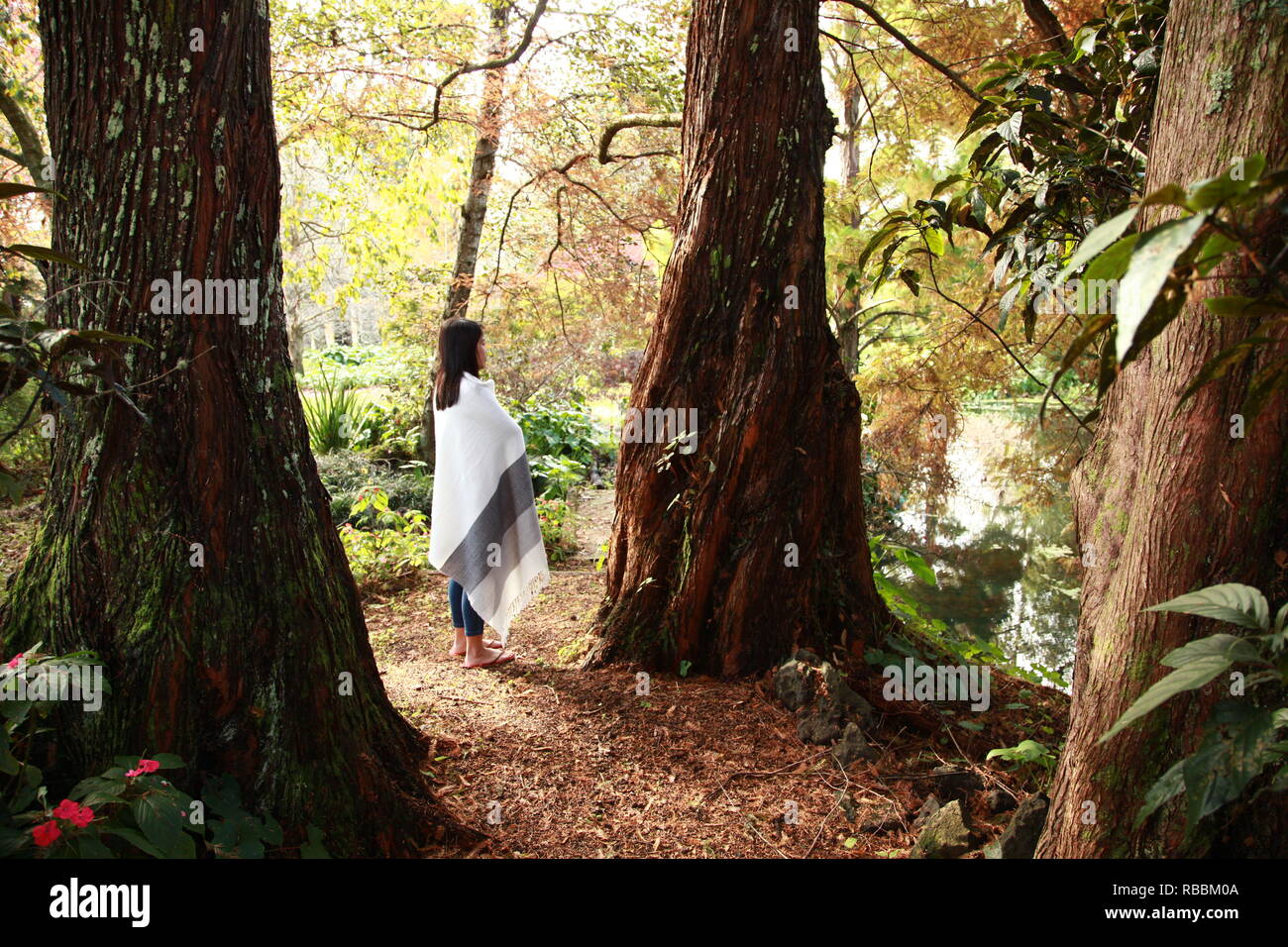 Woman among redwoods looking at nature - Stock Image