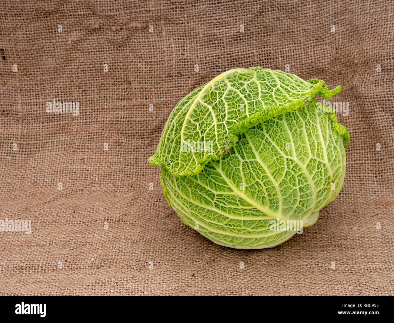 Savoy type cabbage on hessian aka burlap, sacking Green vegetable. - Stock Image
