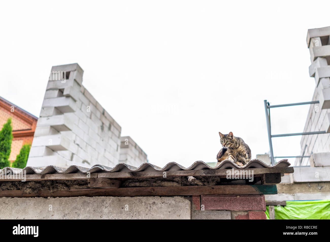 Funny stray tabby one cat grooming scratching sitting on roof of building house street in Rivne, Ukraine or Russia, low angle view Stock Photo