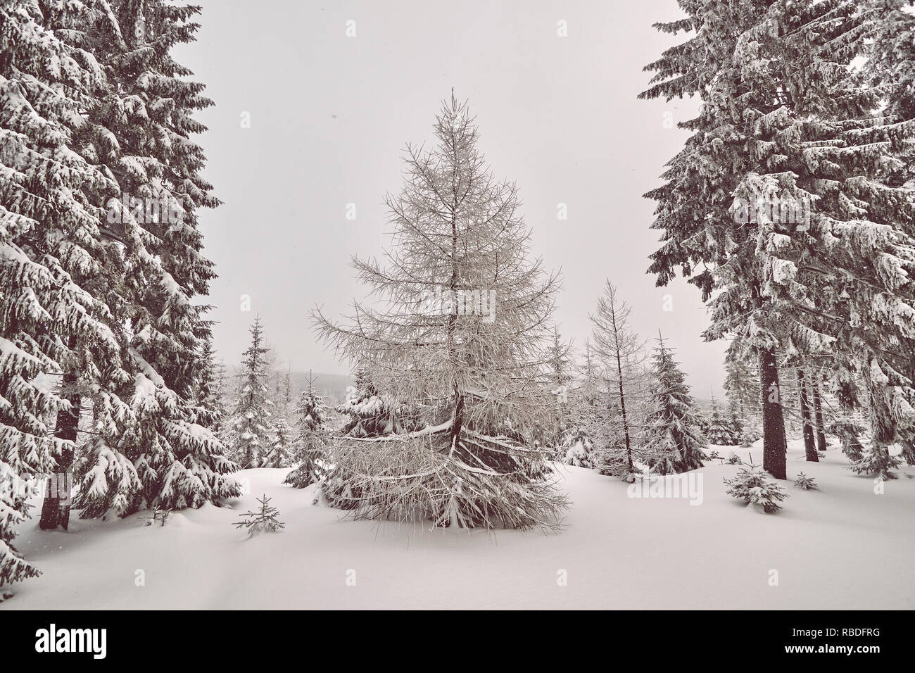 Winter landscape after snowfalls, retro color toning applied. - Stock Image
