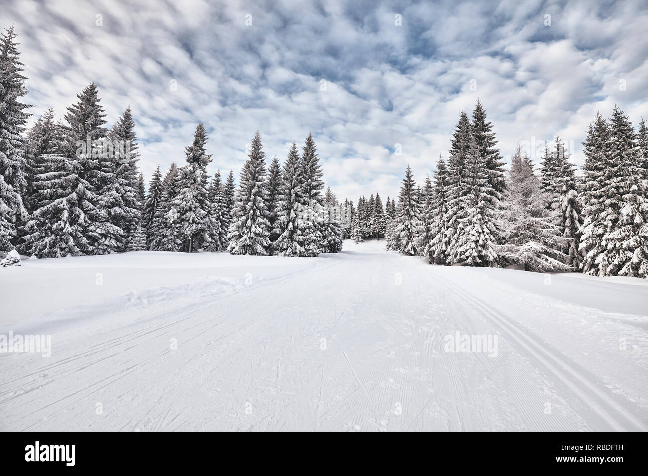 Winter landscape with cross-country skiing trails, Jakuszyce, Poland. - Stock Image