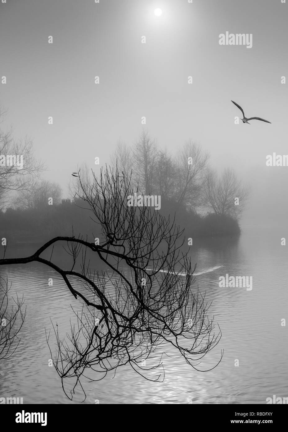 Misty - Stock Image