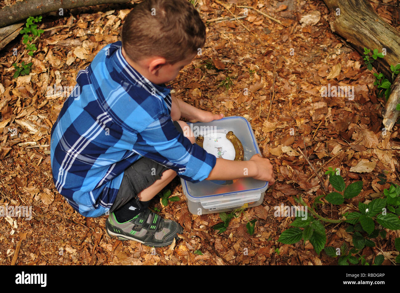 geocaching boy finds a well camouflaged cache in the forest - Stock Image