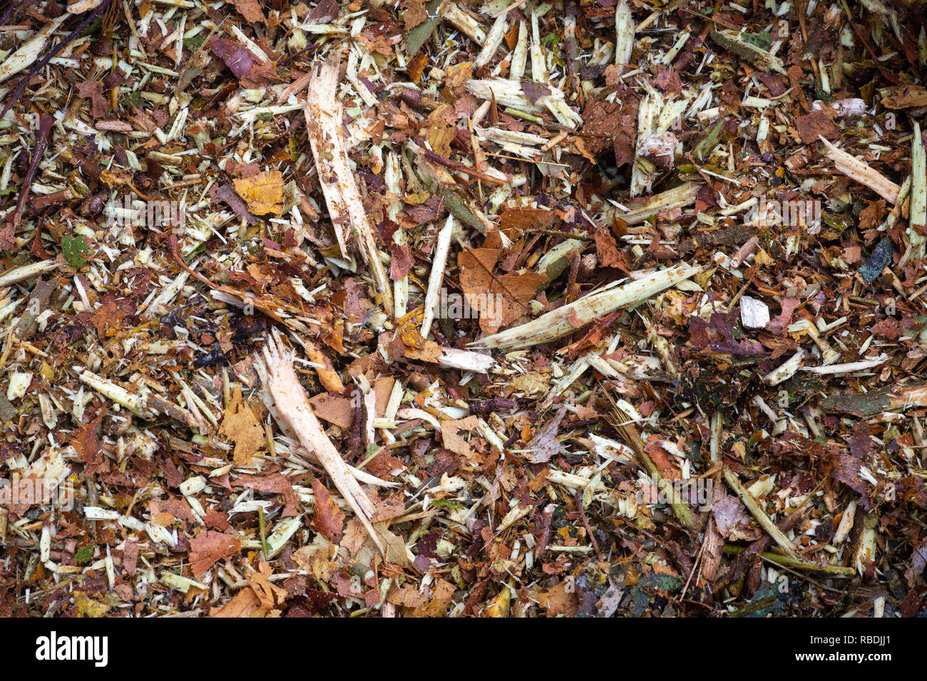 A close picture of a ramial chipped wood (RCW) heap. Used as mulch, those woodchips serve to reinstate the soil biological activity. - Stock Image