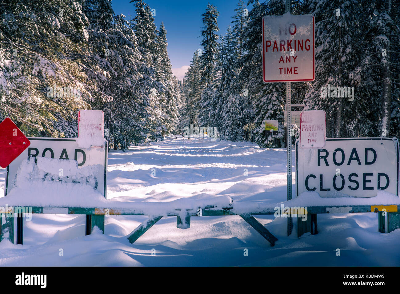 Road closed sign in snowy road in a winter forest. Icy country road in snowy forest in winter. Winter landscape with snowy road - Stock Image