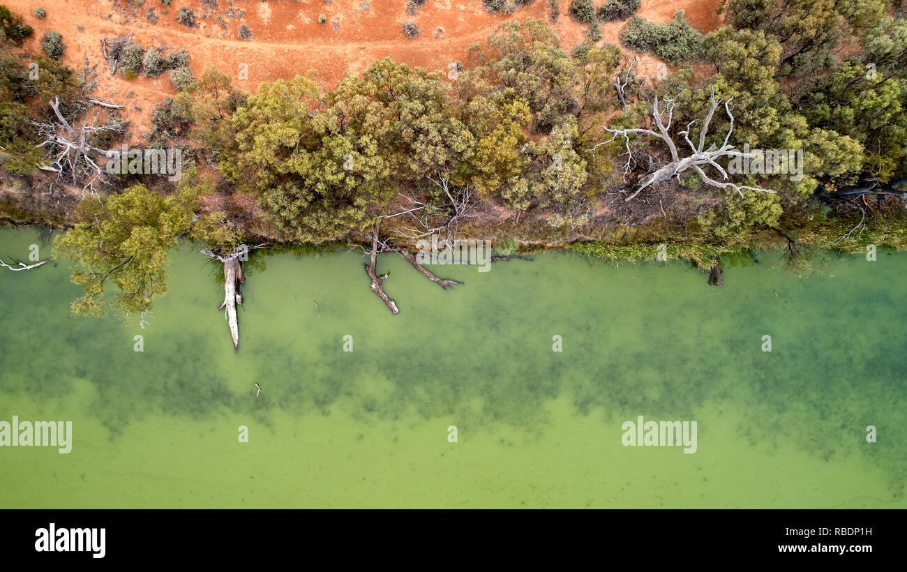 Green water and fallen trees along the edge of Cowanna Billabong. Wildlife habitat, near the Murray River downstream from Mildura. - Stock Image