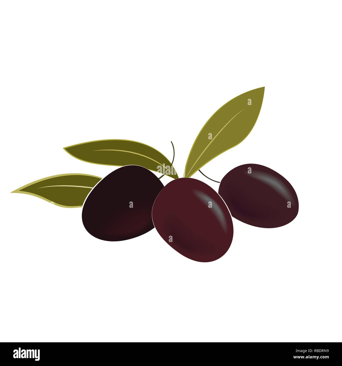 Vector illustration of ripe olives and leaves. Isolated design element.. - Stock Vector