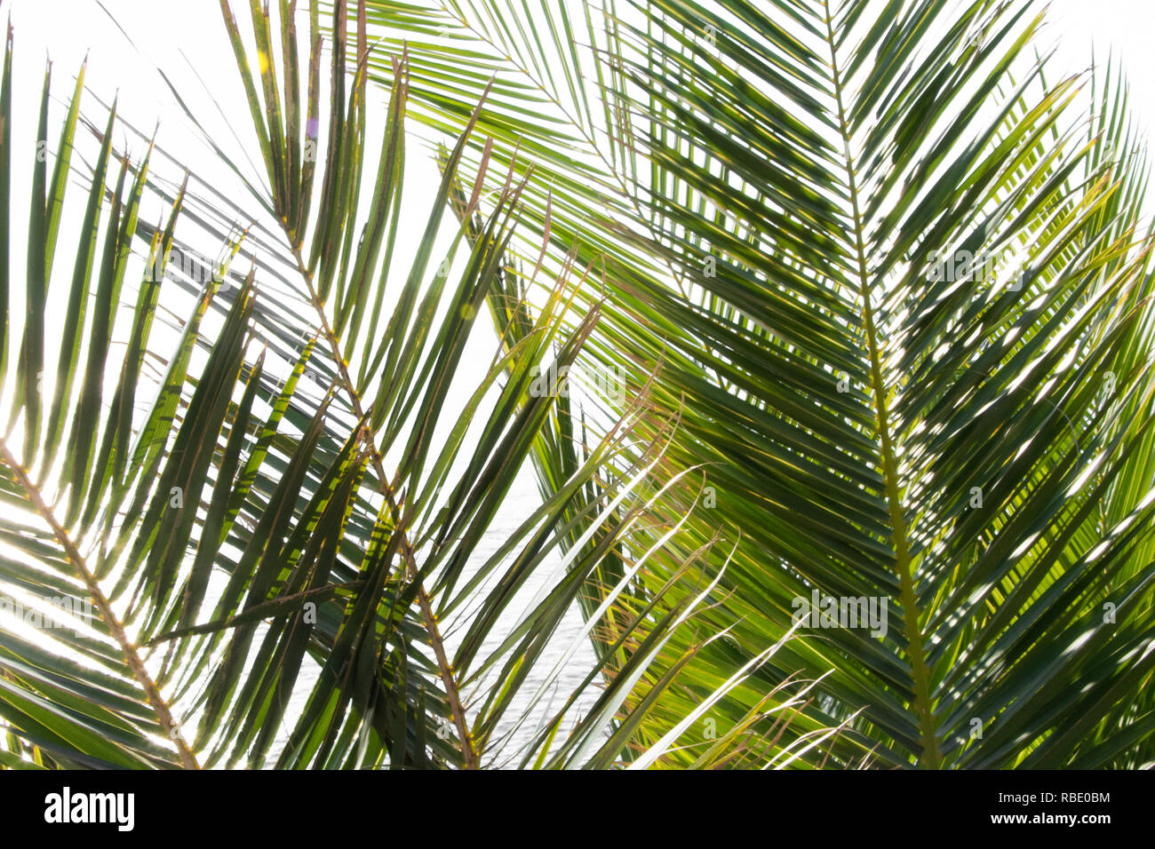 Tropical palm leaves background. Watercolor seamless pattern - Stock Image