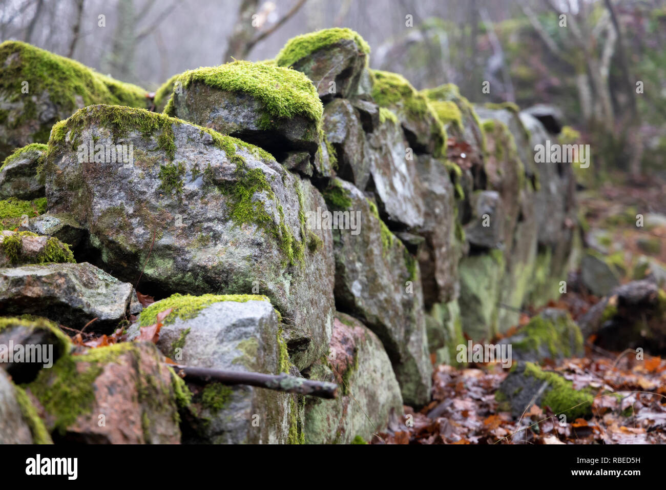 moss covered old crumbled stone fence - Stock Image