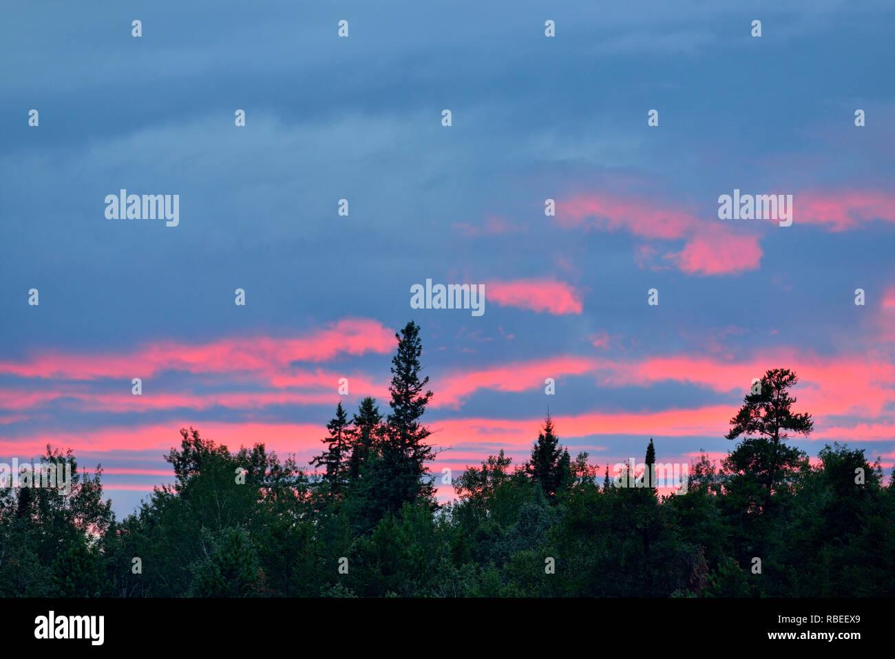 Evening sky over conifers near Halfway Lake, Halfway Lake Provincial Park, Ontario, Canada - Stock Image