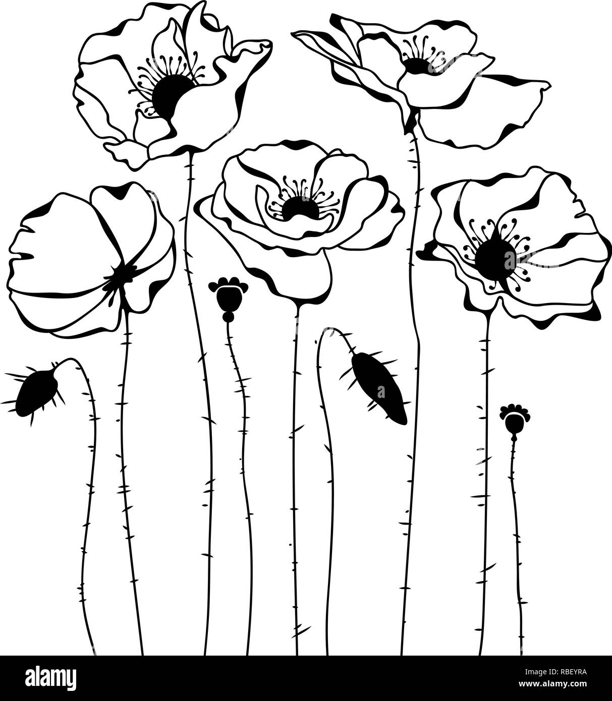 Sketch of poppies silhouette isolated on white background - Stock Vector