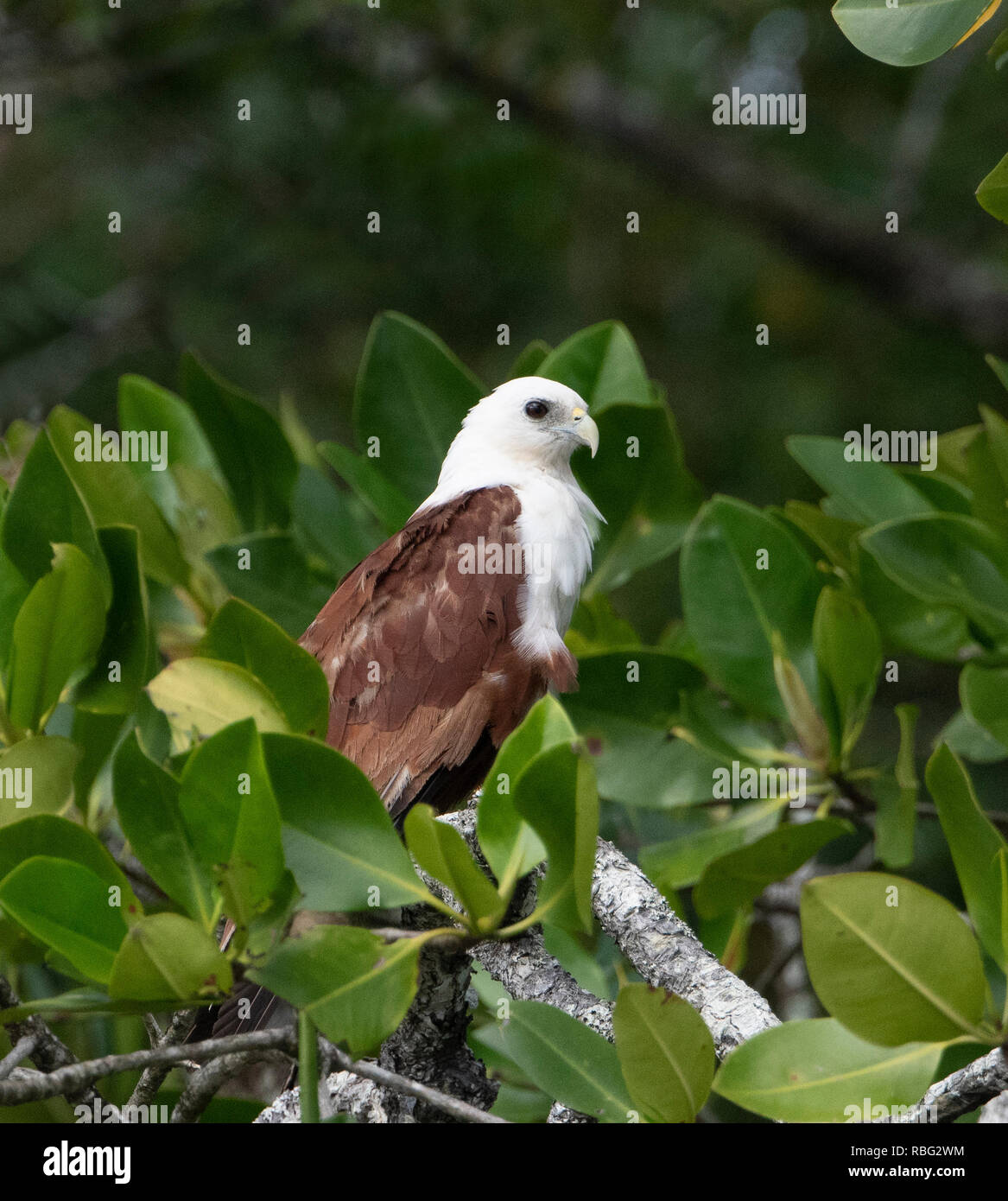 Daintree National Park Wet Tropics Far North Queensland Fnq Qld Australia Stock Photo Alamy
