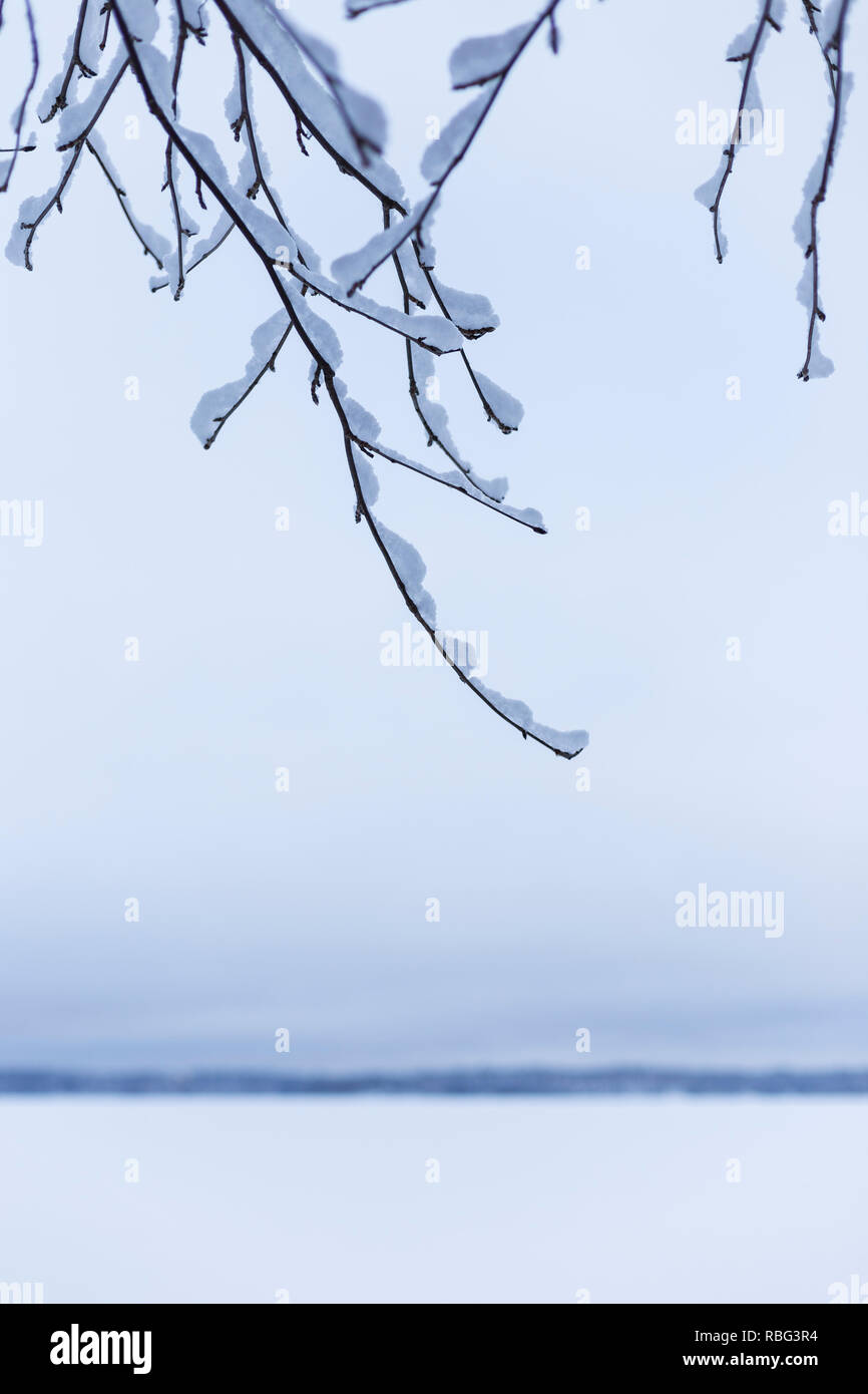 Close-up of snowy branches against overcast sky in the winter. Defocused snowy lake and horizon is in the background. Minimalistic photo, blue hue. - Stock Image