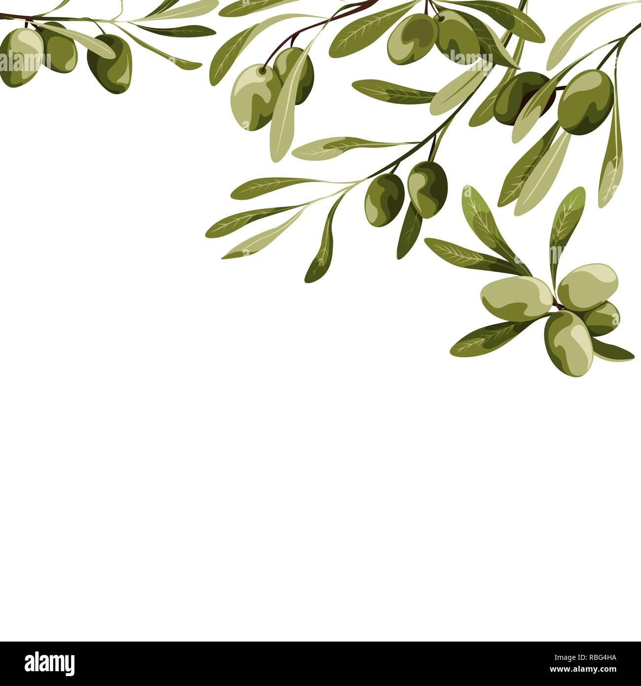 Vector background with olive tree decoration. Vegan food illustration - Stock Image