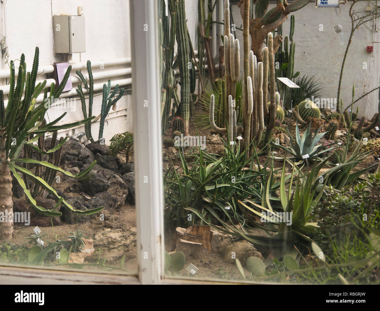 Cacti and succulents in a greenhouse in the botanical garden in Oslo Norway - Stock Image