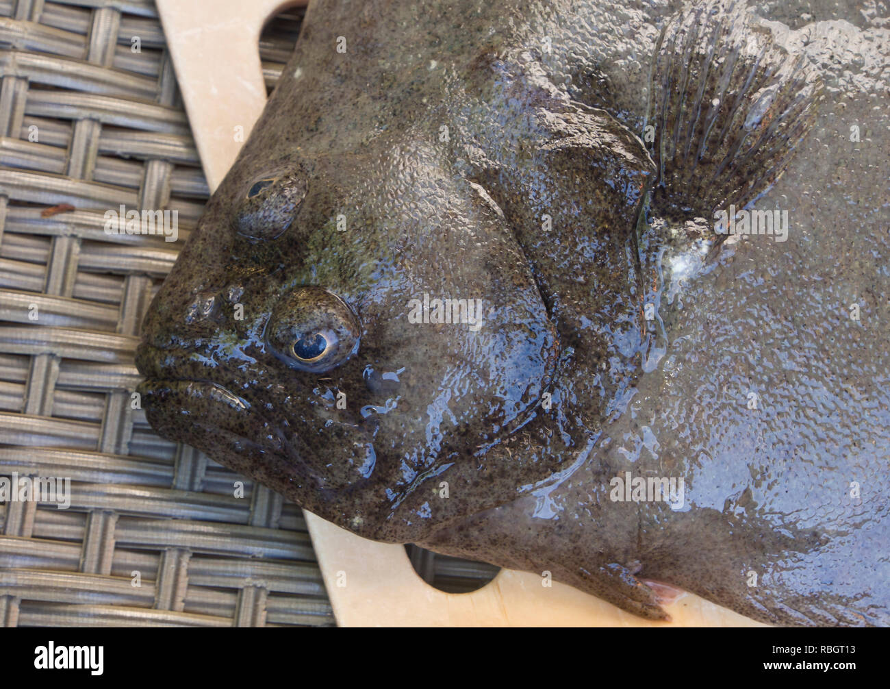Brill, Scophthalmus rhombus, a flatfish on a cutting board ready for cooking, fished in the Oslo fjord Norway - Stock Image